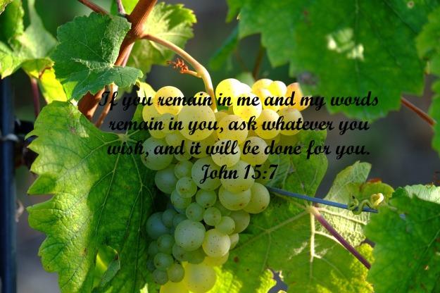 grapes-908989_1280